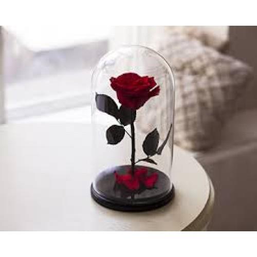 Купить на заказ Заказать Роза в колбе Красная с доставкой по Богровое  с доставкой в Боровом